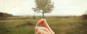 A mustard seed in comparison to the tree it grows into.