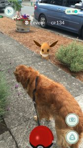 Let's not forget all the fun we can have with where we find Pokemon and how we end up finding them. My dog helped me sniff this one out!